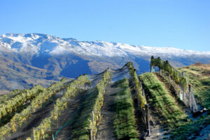 Weinregion Central Otago in Neuseeland
